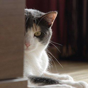 Как проверить беременна ли кошка