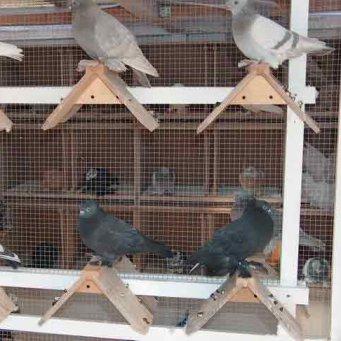 Гнездо для голубей своими руками видео