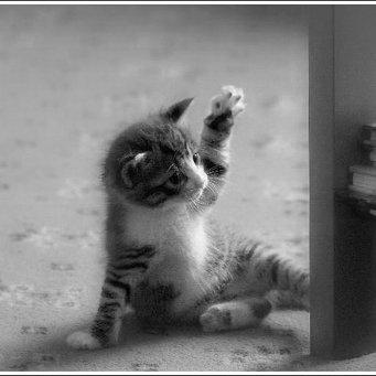 Как отучить кошку царапать мебель, кошка царапает мебель
