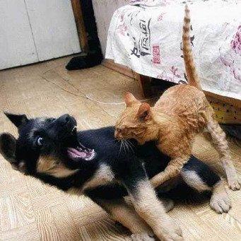 Что делать если сильно укусил кот