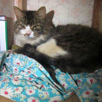 как лечить кошку от простуды