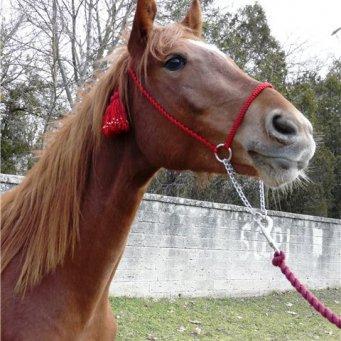 Как сделать гриву для лошади фото 799