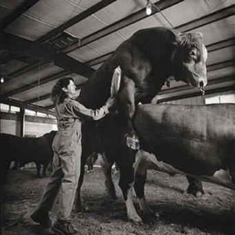 совместимость со знаком быка