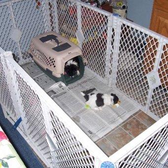 Вольер для собак в квартире своими руками