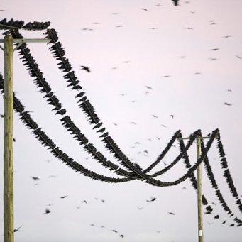 Перелетные птицы своими руками фото 506
