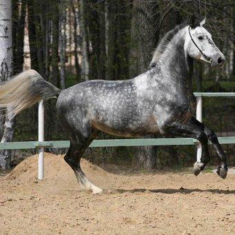 лошади и их знакомые