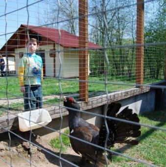 80Как сделать вольер для фазан
