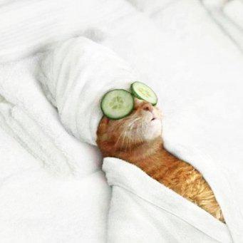 Массаж лапок для кота