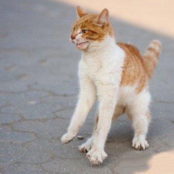 Как успокоить злого кота