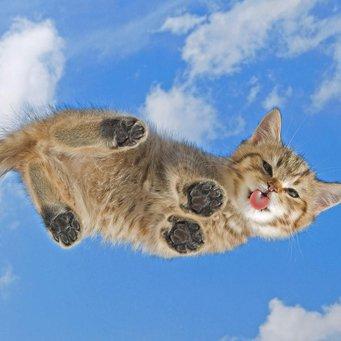 У кота облысели лапы