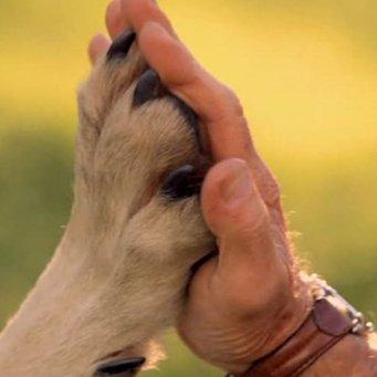знакомство человека и собаки