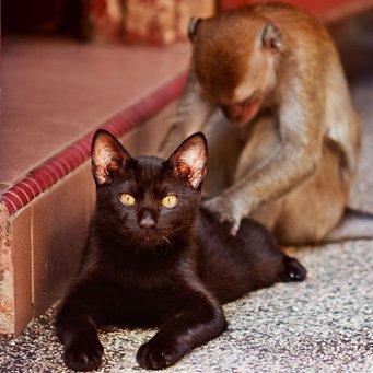 Глисты у кошек и котят. Как избавиться от глистов Кошка 28