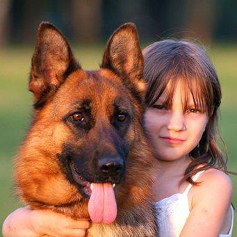 Ребенок и немецкая овчарка