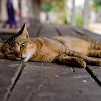 Парализация у кота