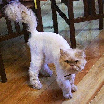 нужно ли кошку знакомить с животными