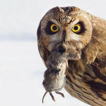 ничего не сказала сова старику но перестала у него на лугу мышей ловить