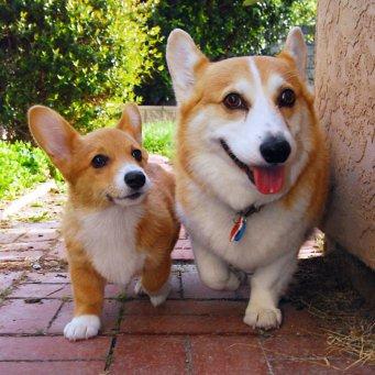 запах изо рта собаки причины и лечение