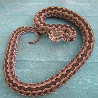 Какие виды змей бывают - b8080
