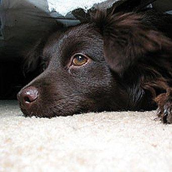 собаки от цистита
