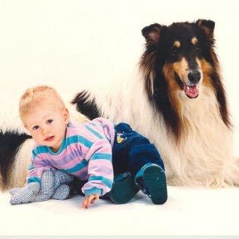 собака знакомится с ребенком
