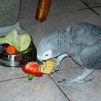 Какие овощь да фрукты позволительно вносить попугаям?