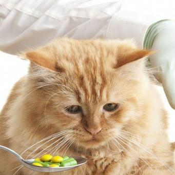 Идет пена у изо рта у кота