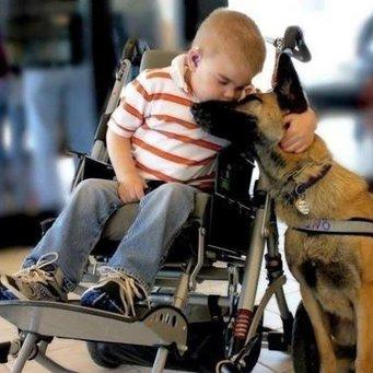Как собаки излечивают от аутизма. 181bde1a70390c565a2765f20cffbc3a