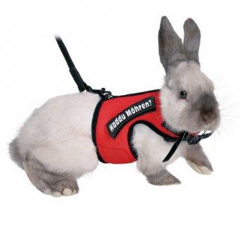 Как сделать поводок кролику