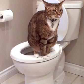 что делать чтоб кошка не гадила