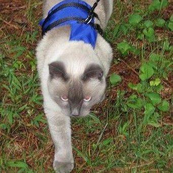 Купить шлейку на кота