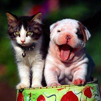 Как приучить кота к собаке