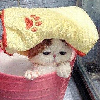 как познакомит котёнка с водой