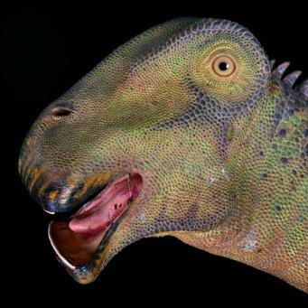 Картинки по запросу Нигерзавр фото