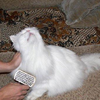Как удалить у кота свалявшуюся шерсть