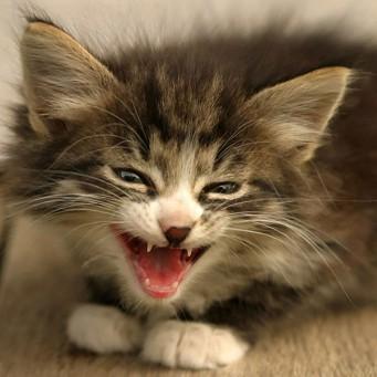 Что символизирует статуэтка египетская кошка