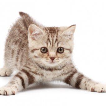 Кот не пьет и не кушает
