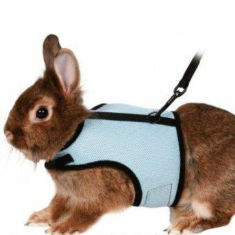 Поводки для кроликов своими руками - Самодельные