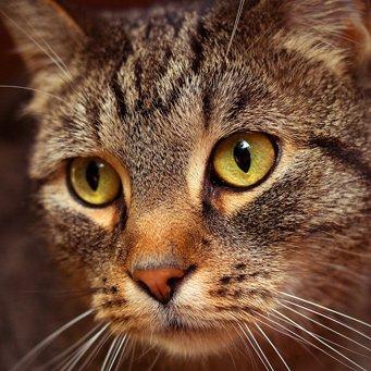 Лечить артрит у кошек - Все про суставы