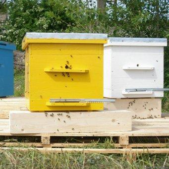 разведение пчел в ульях лежаках