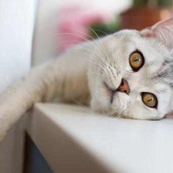Гепатит у кота лечить