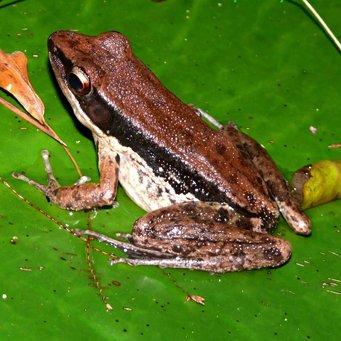 Акватеррариум  для лягушки 4