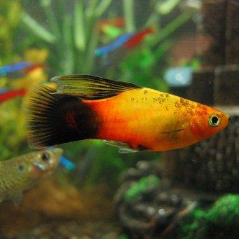 Популярные виды рыбок эта