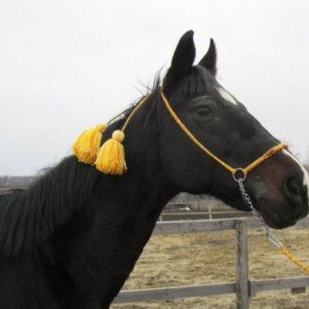 Украшения с лошадью своими руками