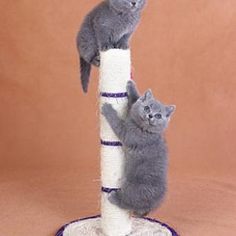 Когтеточка для котят своими руками в домашних условиях