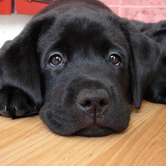 собака рожденная под знаком стрельца