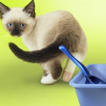 Как часто кошки ходят в туалет