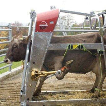 Болезни коров суставов подагра суставов способы лечения