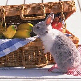 рацион питания кроликов в домашних условиях