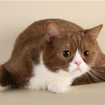 Как и чем кормить кошку решать вам
