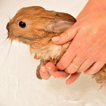 Как вывести блох у кроликов в домашних условиях